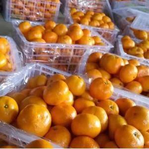 湖北三峡特早蜜橘,量大货多,打蜡崔黄,精品包装一条龙服务...