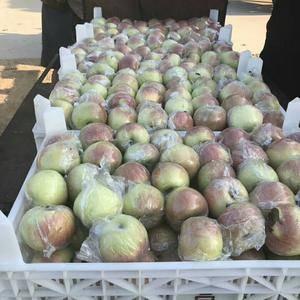 山东黄金梨,丰水梨产地大量上市了,货源充足,口感脆甜,欢...