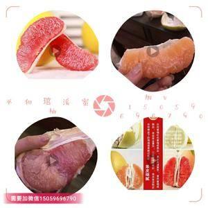 有大量平和琯溪蜜柚出售,招代理支持一件代发v 15059...