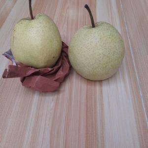 蒲城酥梨大量上市皮薄肉厚鲜嫩多汁欢迎广大客商前来洽谈合作