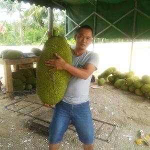 菠萝蜜果地直发,一级果