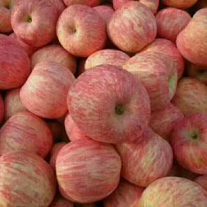 供应:红富士苹果,红将军苹果,红星苹果,金帅苹果,冷库红...