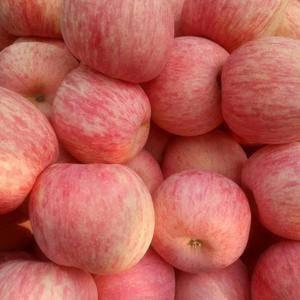 山东优质红露,红富士,美八苹果,产地批发,果园直销!电话...
