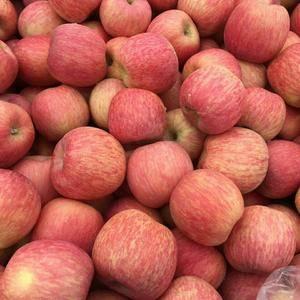 山东万亩苹果基地。  供应:红富士苹果,红将军苹果,红星...