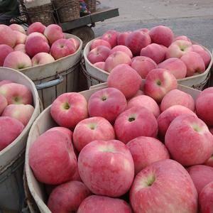 【18396768345】纸袋红星苹果,红将军苹果大量上...