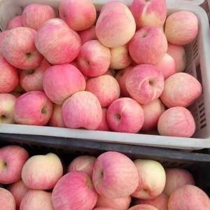 【18396768345】纸袋红将军苹果大量上市,需要抓...