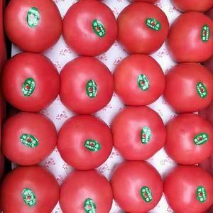 山东淄博临淄常年供应西红柿、西葫芦、辣椒、茄子、豆角等各...