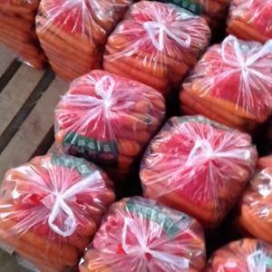 胡萝卜,广红萝卜,黄萝卜,紫萝卜。电话182204242...
