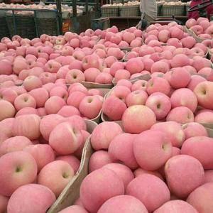 红星苹果,红将军苹果大量上市,需要的联系13869970...