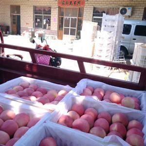 山东红星苹果,红将军苹果,红富士苹果产地批发量大,货源充...