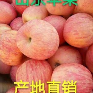 山东【红星,红将军苹果大量上市】,红富士苹果常年供应,颜...