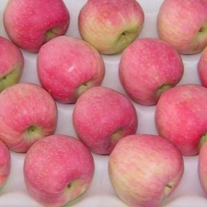 山东红星苹果大量上市!13053901319