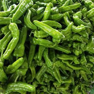 河南夏邑辣椒大量上市,有301辣椒,苏椒,线椒,需要的可...