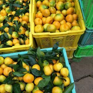 来自云南玉溪华溪的蜜桔,味道酸甜可口,汁多无渣,含糖度高