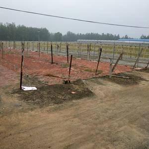 红薯粉条,山东临沭县秀涛粉业,电话:1505494502...