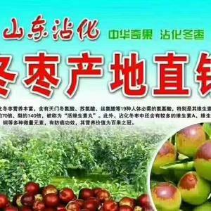 大量销售沾化大田冬枣,绿色无公害。