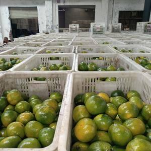 我们是专业的柑橘合作社,现在普早蜜桔大量上市,有需要的可...