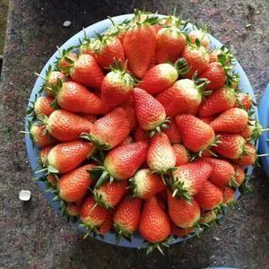 专业代办代收油桃樱桃草莓葡萄等新鲜水果,我们这里有大型交...