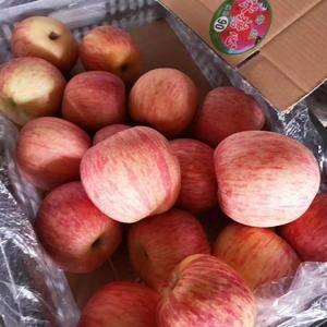 山东红富士苹果大量上市,【183-9676-8345】果...