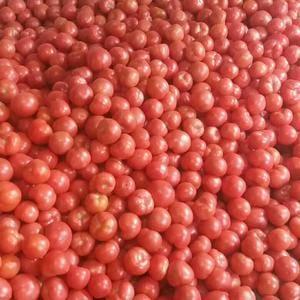 我处全年有冷棚西红柿温室西红柿,果型好硬度极好颜色漂亮。