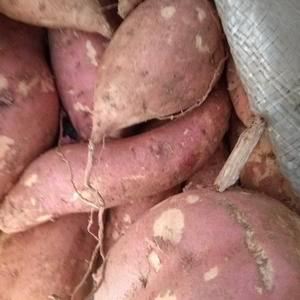 烟薯25大量上市了支持统货也可按客户要求分拣,有需要联系...