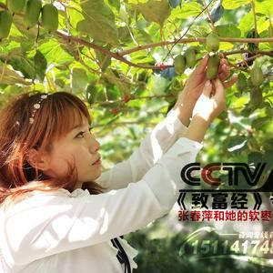 软枣猕猴桃苗子,奇异莓苗子,好品质,好服务,好技术