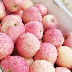 山东红富士苹果大量下树了13791583868因我处今年...