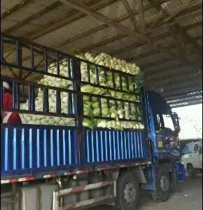 本人专业做市场白菜。代收蔬菜多年望新老客户前来选购。