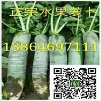潍坊市寒亭区水果萝卜供应基地,纯瓜茬萝卜,青茬,口感一流...
