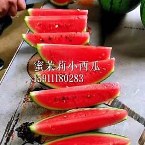 各位好,我是做礼品西瓜育种的华太丰田种业。礼品西瓜是基地...