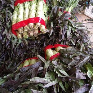 临沂沂南红叶莴苣-西芹大量上市欢迎来采购