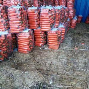 河南开封红萝卜大量上市,有需要的老板请联系1372321...