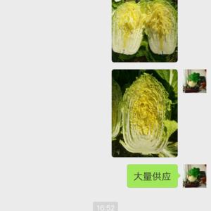 黄心白菜大量供应。价格已经最低了。