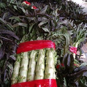 临沂沂南大量供应红叶莴苣,量很大,欢迎来采购