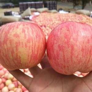 山东苹果产地,大量供应膜袋富士、纸袋富士、纸夹膜富士,冷...