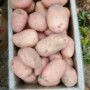 常年出售每个等级优质土豆,电话18387425230