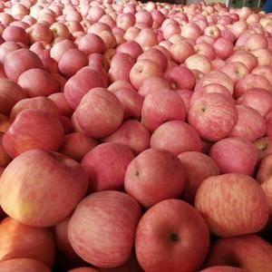 【18653931522】产地常年供应红富士苹果,【纸袋...