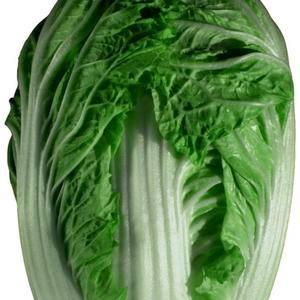 秋白菜,青杂白菜大量上市,有需要的请联系,货品保质保量