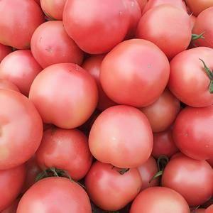 西红柿量可以了,质量不错。