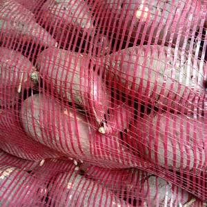 黑土地软面香甜可口的春红薯热卖中…