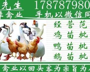 广西南宁市四季禽苗孵化有限公司多年以来,依照国家发展新农...