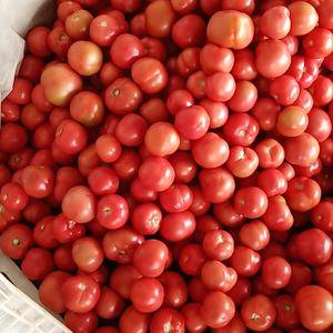 西红柿大掉价,保证质量,诚信交易