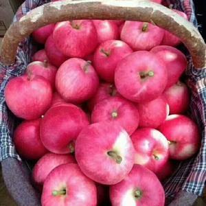洛川红富士苹果出库中