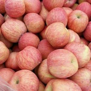 红富士苹果硬度较大、果面洁净、色泽鲜艳、酸甜适度,品质有...