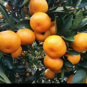 普橙多少钱?