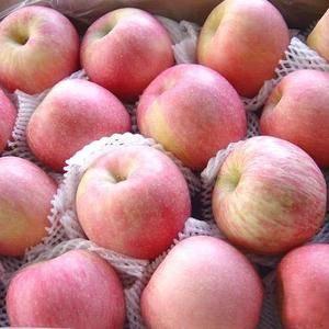 哪里的苹果好吃还便宜?