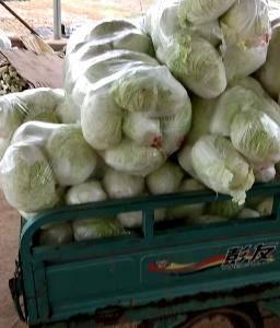 防雾大白菜包装袋厂家批发一件包邮,15077957130