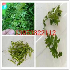 山东新泰黄花菜基地,花椒芽即将开始上市需要的联系1395...