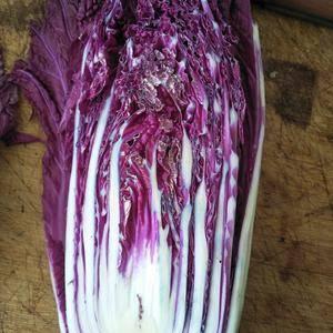 紫白菜有一个名紫宝新品种含大量花青素能延缓衰老