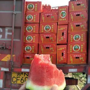 我县位于广东西部交通便利、大棚西瓜种植3万余亩、 、品质...
